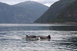 De la Compagnie ! Je ne m'attendais pas à voir des Dauphins dans des eaux aussi froides !